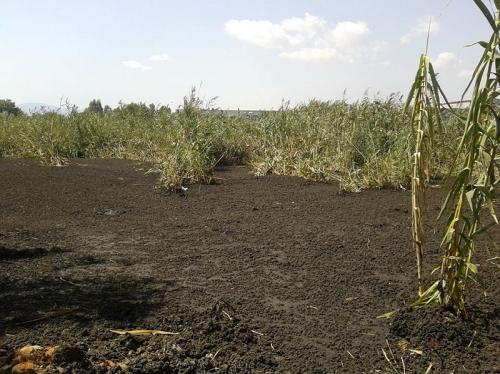 Η ανεξέλεγκτη διάθεση της λάσπης του Βιολογικού προσβάλλει την πόλη