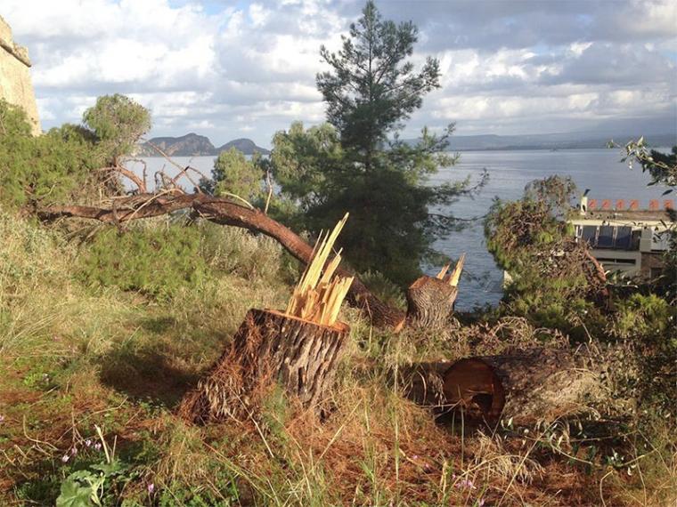 Οι εξηγήσεις του Δήμου για τα δέντρα που κόπηκαν στο Νιόκαστρο της Πύλου